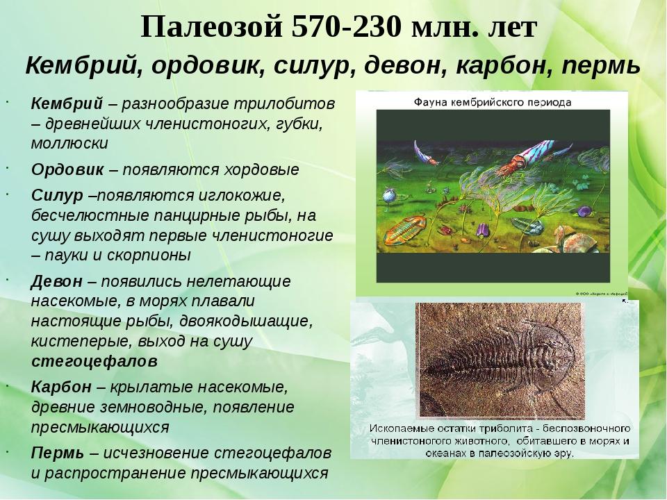 Палеозой 570-230 млн. лет Кембрий – разнообразие трилобитов – древнейших член...