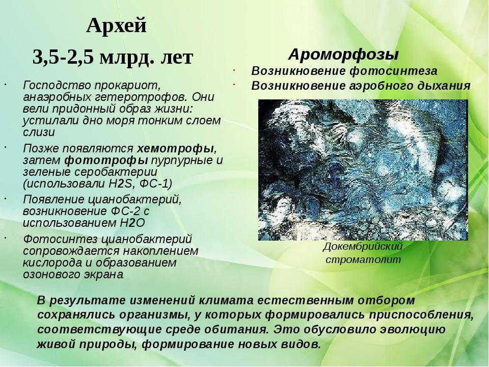 Архей 3,5-2,5 млрд. лет Господство прокариот, анаэробных гетеротрофов. Они ве...