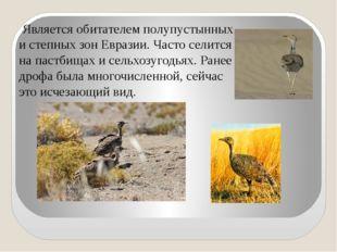 Является обитателем полупустынных и степных зон Евразии. Часто селится на па