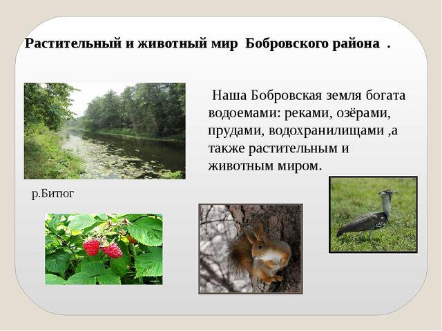 Растительный и животный мир Бобровского района . Наша Бобровская земля богата...