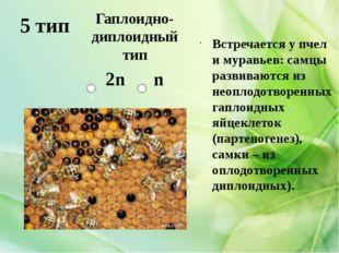 5 тип Встречается у пчел и муравьев: самцы развиваются из неоплодотворенных г