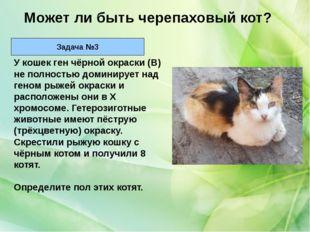 У кошек ген чёрной окраски (В) не полностью доминирует над геном рыжей окраск