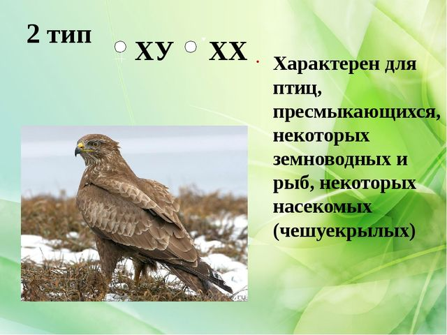 2 тип Характерен для птиц, пресмыкающихся, некоторых земноводных и рыб, некот...