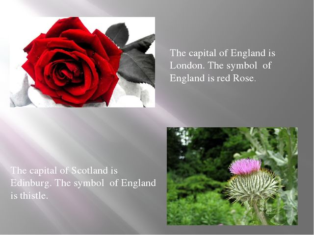 The capital of England is London. The symbol of England is red Rose. The capi...