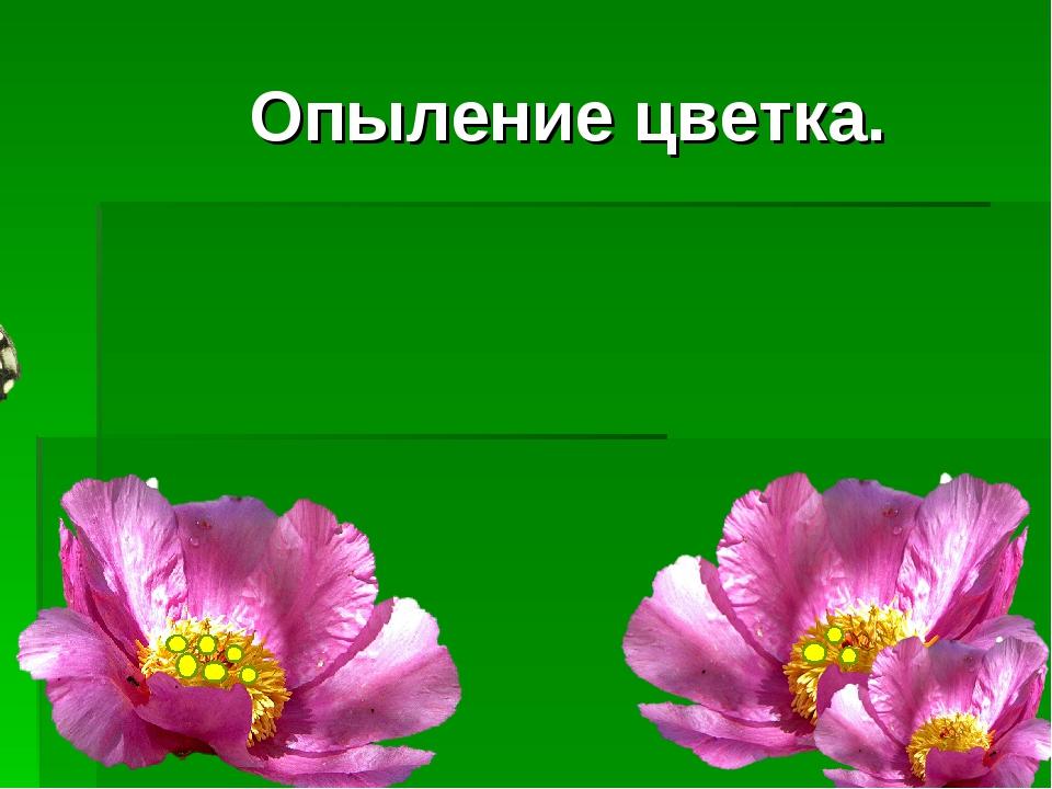 Опыление цветка.