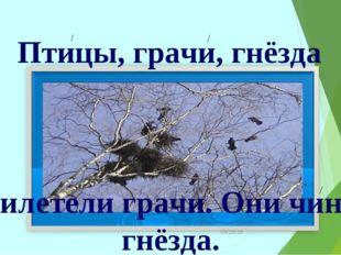 * Птицы, грачи, гнёзда Прилетели грачи. Они чинят гнёзда.