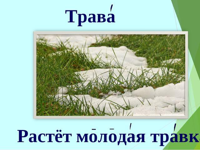 * Трава Растёт молодая травка.
