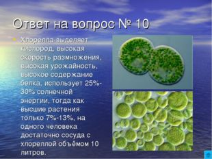 Ответ на вопрос № 10 Хлорелла-выделяет кислород, высокая скорость размножения