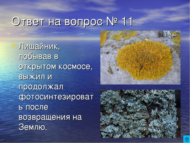 Ответ на вопрос № 11 Лишайник, побывав в открытом космосе, выжил и продолжал...