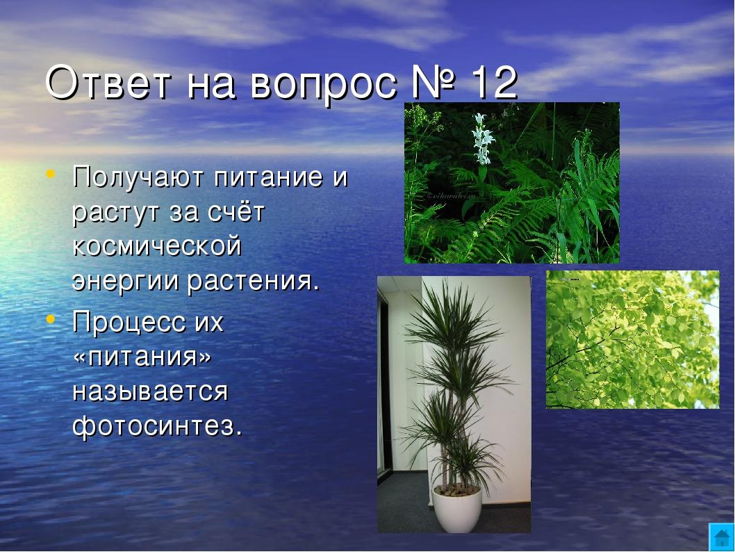 Ответ на вопрос № 12 Получают питание и растут за счёт космической энергии ра...