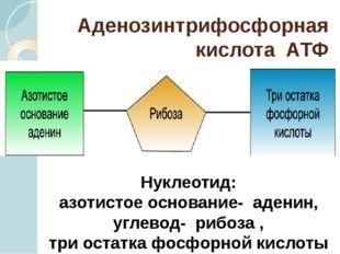 Аденозинтрифосфорная кислота АТФ Нуклеотид: азотистое основание- аденин, угле