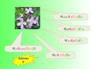 Ч(5)Л(5)Т 5 П (2) Ч5 Л 5 Т00П00 Ч 5 Л1+2+2Т(9)+1П1 Ч О Л(5)Т5П 2 Ч 2+2 Л 4Т2