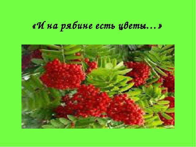 «И на рябине есть цветы…»