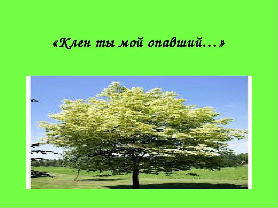 «Клен ты мой опавший…»