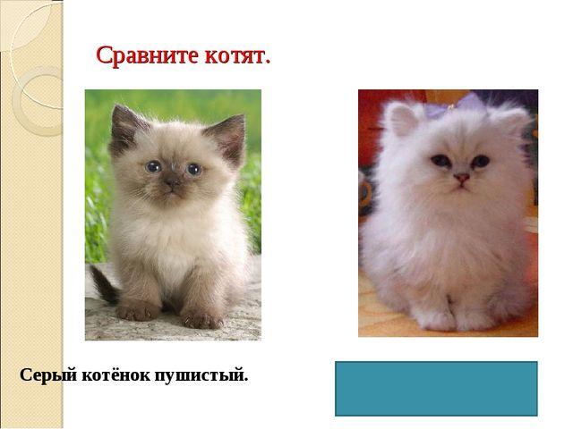 Сравните котят. Серый котёнок пушистый. А белый котёнок более пушистый.