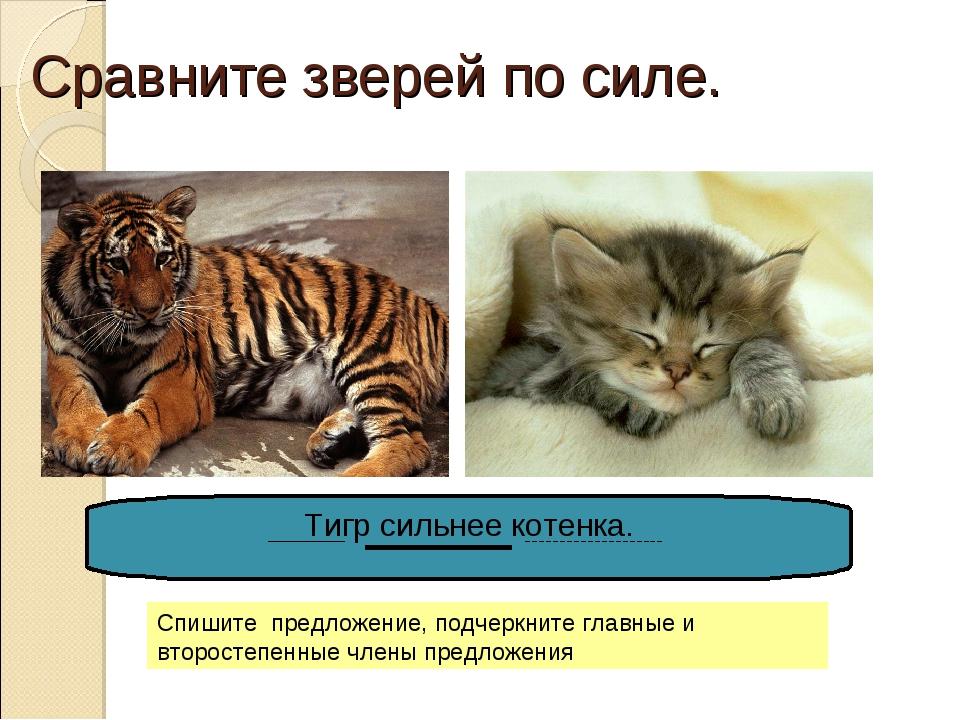 Сравните зверей по силе. Тигр сильнее котенка. Спишите предложение, подчеркни...