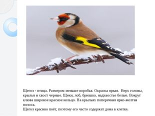 Щегол - птица. Размером меньше воробья. Окраска яркая. Верх головы, крылья и