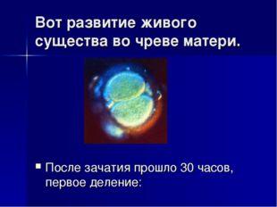 Вот развитие живого существа во чреве матери. После зачатия прошло 30 часов,