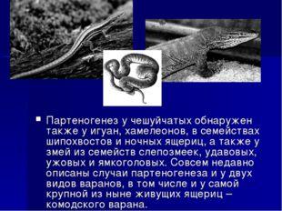 Партеногенез у чешуйчатых обнаружен также у игуан, хамелеонов, в семействах ш