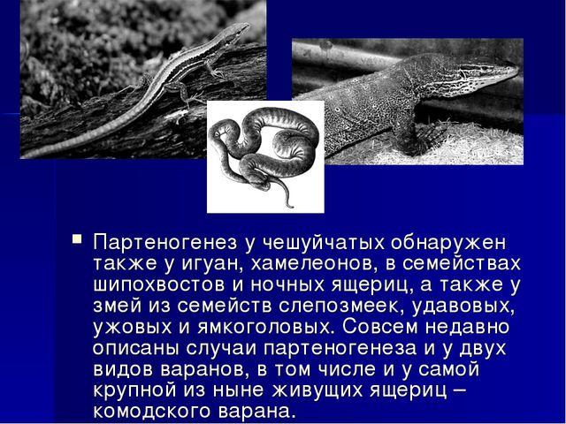 Партеногенез у чешуйчатых обнаружен также у игуан, хамелеонов, в семействах ш...
