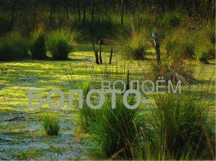 Зачем нужны болота Болота играют важную роль в образовании рек. На болотах ра