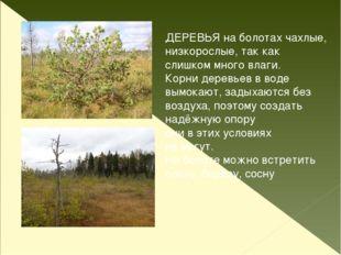 Ряска Кувшинка Стрелолист Рогоз Камыш Болотные растения
