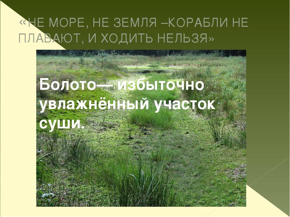 «НЕ МОРЕ, НЕ ЗЕМЛЯ –КОРАБЛИ НЕ ПЛАВАЮТ, И ХОДИТЬ НЕЛЬЗЯ» Болото— избыточно ув...