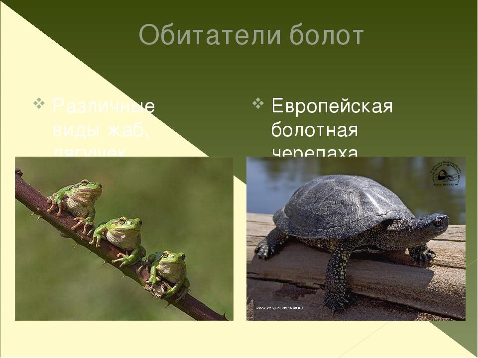 Насекомые Жук-плавунец Гладыш Водомерка Стрекоза