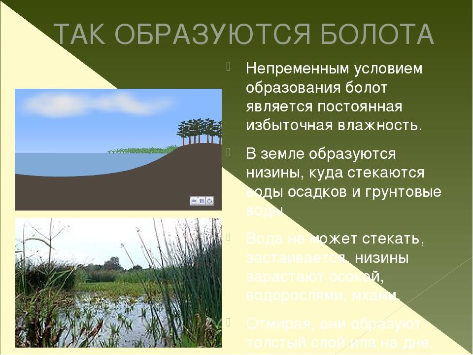 ТАК ОБРАЗУЮТСЯ БОЛОТА Непременным условием образования болот является постоян...