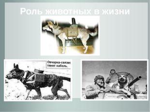 Роль животных в жизни людей