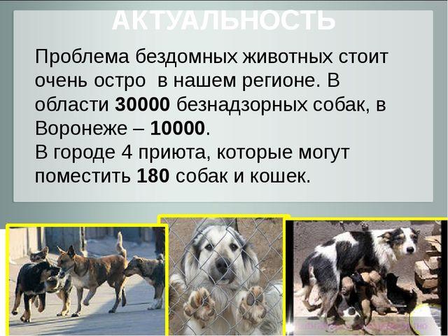 АКТУАЛЬНОСТЬ Проблема бездомных животных стоит очень остро в нашем регионе. В...