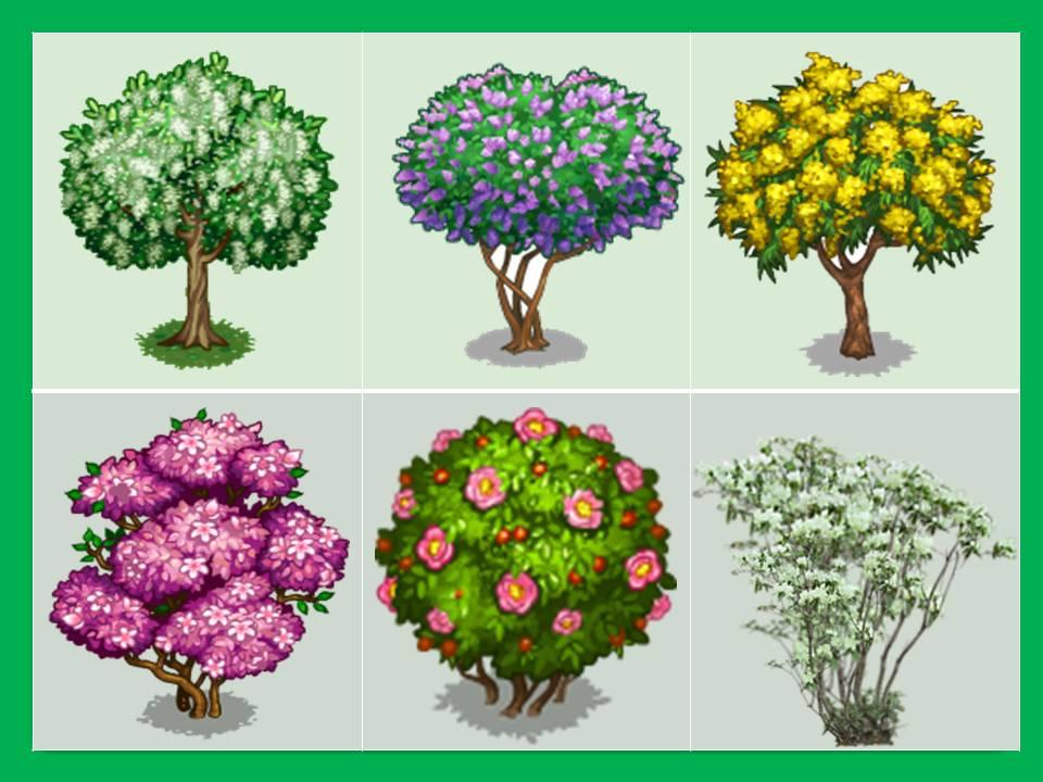 Картинки для детей деревья и кустарники