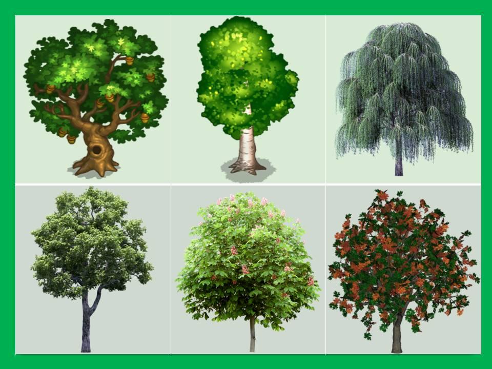 картинки для презентации деревья и кустарники выполненная