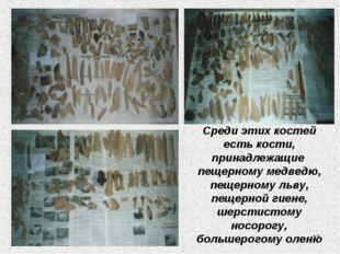 Среди этих костей есть кости, принадлежащие пещерному медведю, пещерному льву
