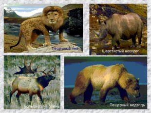 Пещерный лев Шерстистый носорог Большерогий олень Пещерный медведь *