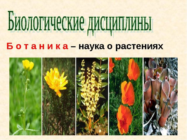 Б о т а н и к а – наука о растениях *