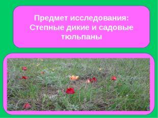 Предмет исследования: Степные дикие и садовые тюльпаны