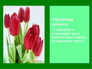 Проблема проекта: Сокращение и исчезновение числа видов тюльпана Шренка на т