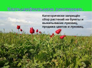 Категорически запрещён сбор растений на букеты и выкапывание луковиц, продаж