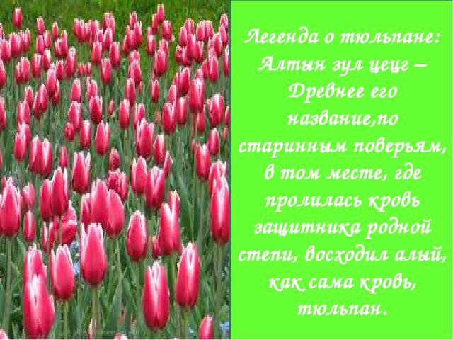 Легенда о тюльпане: Алтын зул цецг – Древнее его название,по старинным повер...