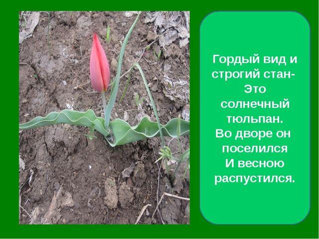 Гордый вид и строгий стан- Это солнечный тюльпан. Во дворе он поселился И ве...