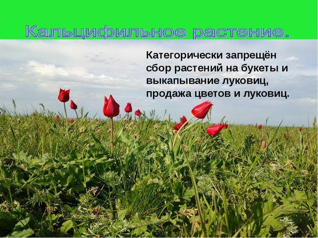 Категорически запрещён сбор растений на букеты и выкапывание луковиц, продаж...