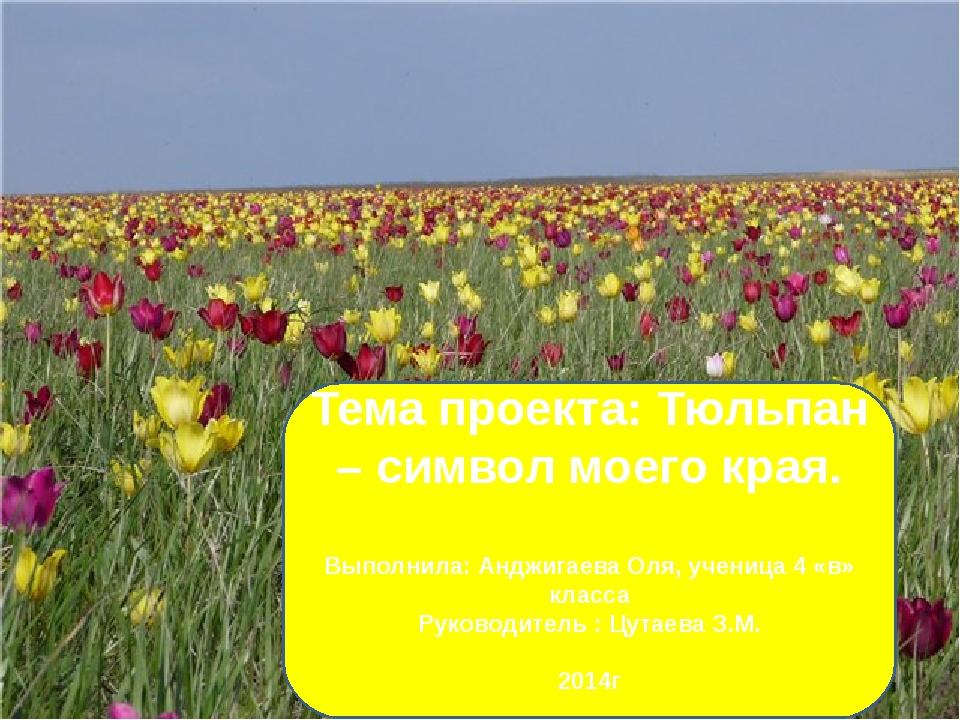 Тема проекта: Тюльпан – символ моего края. Выполнила: Анджигаева Оля, учениц...