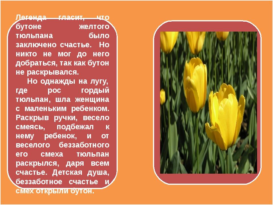Легенда гласит, что бутоне желтого тюльпана было заключено счастье. Но никто...