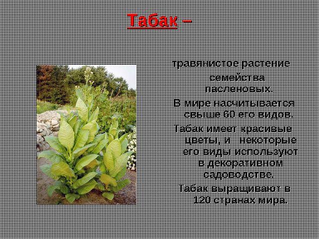 Табак – травянистое растение семейства пасленовых. В мире насчитывается свыше...