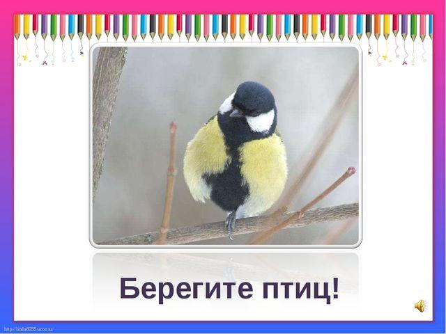 Большая синица Берегите птиц! http://linda6035.ucoz.ru/