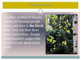 The birch tree. Another symbol of Russia which all Russian people know and lo