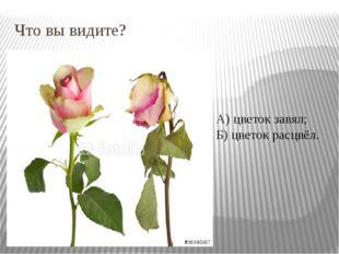 Что вы видите? А) цветок завял; Б) цветок расцвёл.