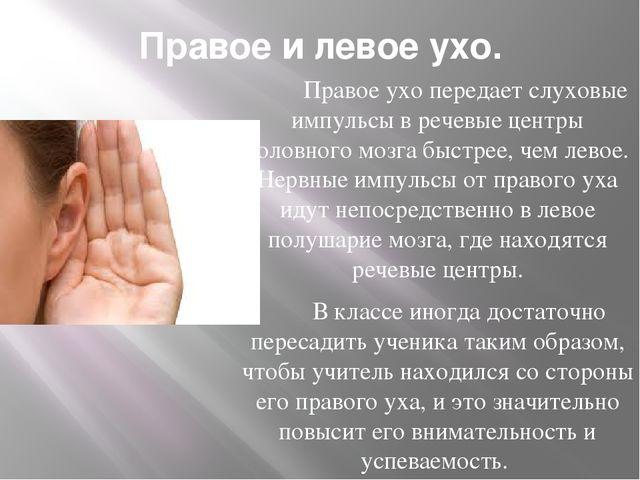 Правое и левое ухо. Правое ухо передает слуховые импульсы в речевые центры го...