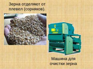 Зерна отделяют от плевел (сорняков). Машина для очистки зерна